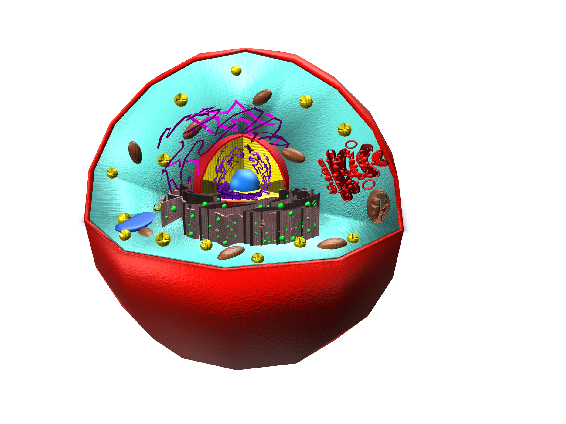 Animal Cell - 3D design by noonehere Nov 5, 2017