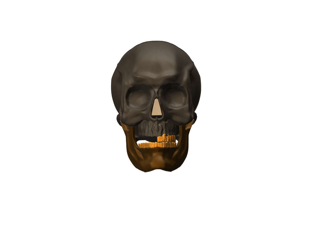 skull - 3D design by Enter Inventive Studio Apr 2, 2018