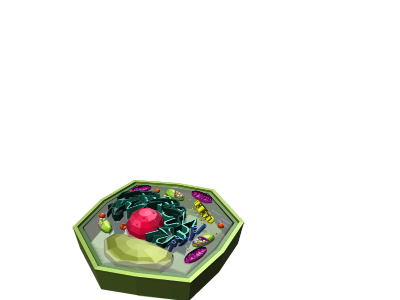 plant cell 3d model extra credit - 3D design by katelynn62202 on Jan 5, 2018
