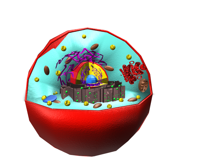 Animal Cell - 3D design by 2023makenzy_george Feb 10, 2018